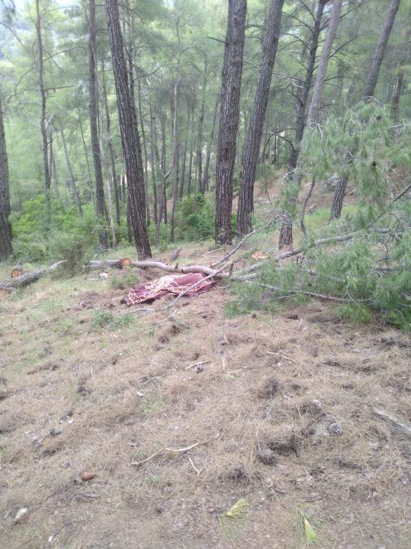 orman işçisi hayatını kaybetti (6)