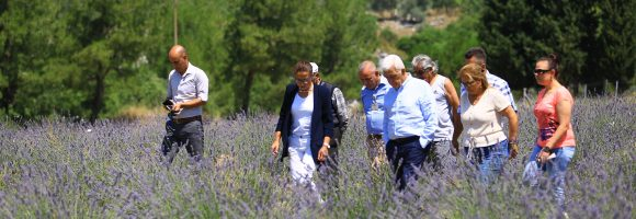 Başkan Gürün ilk Lavanta hasadında (5)